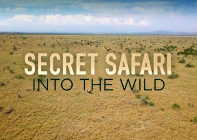 Secret Safari – Into the Wild